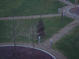 tree1203-3.jpg